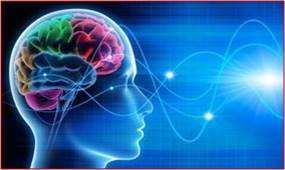 головной мозг и цинк