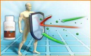 Кордицепс Тяньши - натуральный антибиотик