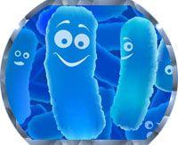 ацидофильные бифидобактерии