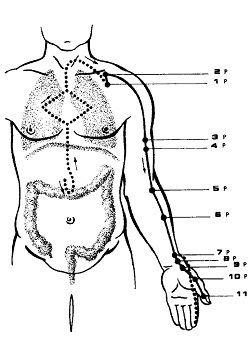 меридиан лёгких