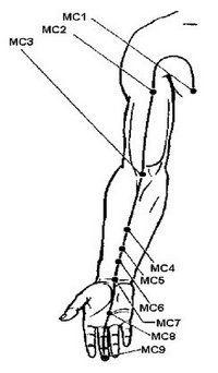меридиан перикарда
