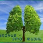 Легкое дыхание через укрепление здоровья лёгких